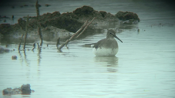 never caught up with it from Grundon Hide where it showed well