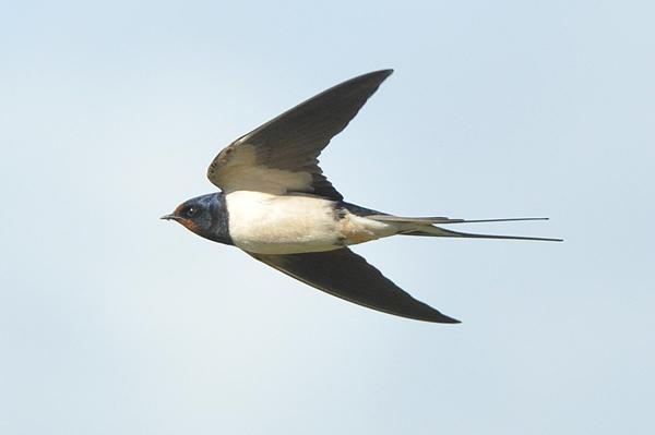 Bird photos May 2009